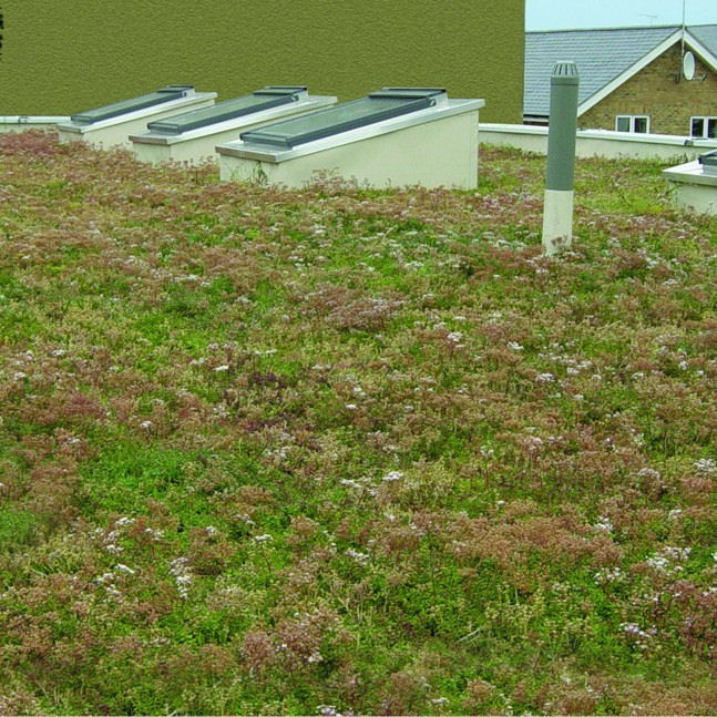 LIVING ROOF SYSTEMS – ATTRACTIVE, EFFICIENT, LONG LASTING & ENVIRONEMNTALLY FRIENDLY